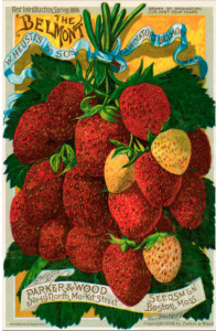 Ad for Belmont strawberries