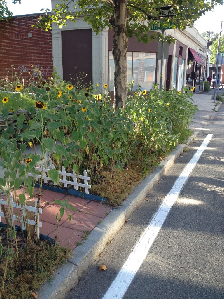 Strip garden on White Street, Belmont / Evanthia Malliris