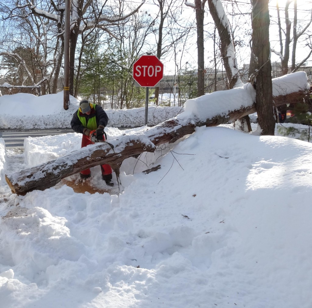 FOLB supporter Andy Friedlich saws a tree blocking the Minuteman Bikeway / Peggy Enders